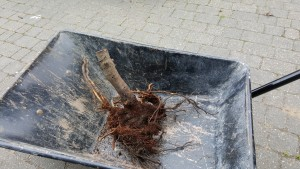 Root ball
